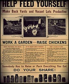 Chickens for food security!