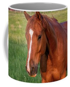 Mugs For Sale, Gifts For Horse Lovers, Coffee Mugs, Horses, Ceramics, Big, Grass, Colorado, Handsome