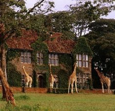 Giraffe Manor, Kenya...my room was the one you see on the corner, 2nd level.  I stayed August 1, 2013. Amazing!