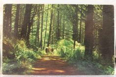 California CA Marin County Trail Postcard Old Vintage Card View Standard Post PC