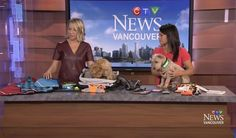 Oct 4, 2016 - Darcy Matheson and Ann Luu discussing pet safety on CTV Vancouver. #BarkNotes #WestCoastRainwear #PetFirstAidKit