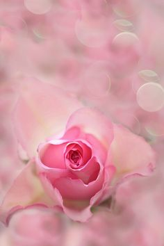 valentine song pk