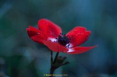 Spring flowers by BawarMohammad Spring Flowers, Award Winner, Plants, Flora, Plant