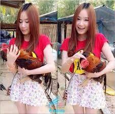 Ayam Bangkok Aduan: Cara Melatih Pukulan Ayam Aduan Biar Lebih Keras B...