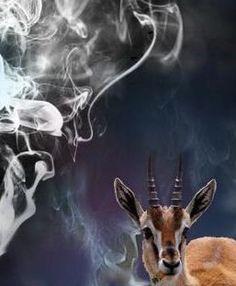 meet Gazelle http://pinterest.com/kikiandgazelle/