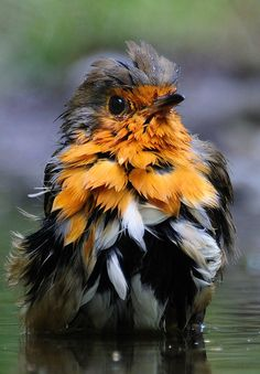 Pretty little bird, but I don't know what he is......