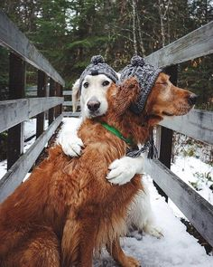 PsBattle: These two dogs hugging it out Animals And Pets, Funny Animals, Cute Animals, Two Dogs, I Love Dogs, Cute Puppies, Dogs And Puppies, Doggies, Dog Life
