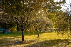 Autumn in the Park by Stephen Robinson on 500px