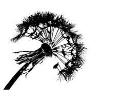 www.publicdomainpictures.net pictures 120000 velka dandelion-fluff-silhouette.jpg