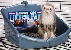 Marshall Pet Products Lock on Litter Pan Ferrets Care, Baby Ferrets, Pet Ferret, Ferret Supplies, Ferret Accessories, Litter Pan, Natural Instinct, Easy Entry