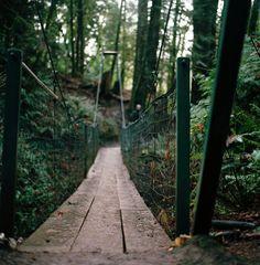 forest swinging bridge