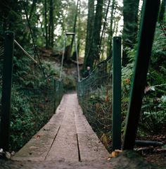 Into the woods rustic bridge forest