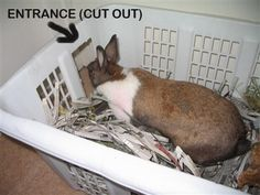 Kaniner elsker at grave, men det sviner - her er løsningen. Lav et hul i en vasketøjskurv og fyld den med iturevne avisstykker, som din kanin kan boltre sig i. http://www.kaninhaandbogen.dk #kaniner #huskaniner #kaninhaandbogen