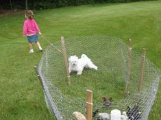 Being the herding breed of dog I am, I want plenty of training! And we also love to train dog agility in the open space around our own cabin, safely and securely. So directly, we thinking about cheap fence ideas for dogs. http://www.royhomedesign.com/cheap-fence-ideas-for-dogs-in-diy-reusable-and-portable-dog-fence/