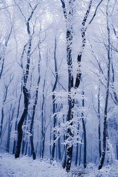 Snow in Franconian Forest, Oberfranken, Germany