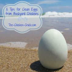 8 Tips for CLEAN EGGS from Backyard Chickens