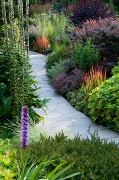 Perennial garden with flagstone path featuring barberry and Japanese Blood Grass, Imperata cylindrica, barberry, Berberis