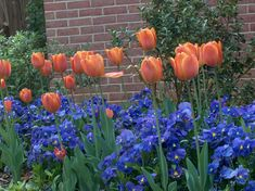 Ideas for Planting Tulips | Ideas for your fall bulb planting - Earthworks Landscaping