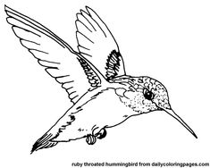 Printable Color Picture Hummingbird | texas ruby throated hummingbird bird coloring pages