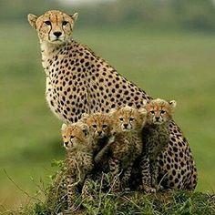 Mamá=Amor con 4 Cachorros