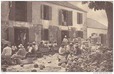 Trimming Sponges , NASSAU , Bahamas , PU-1908 British West Indies, Nassau Bahamas, Sales Image, Original Image, Postcards, Caribbean, Island, History, Vintage