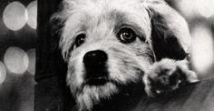 Top Movies About Pets