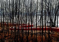 Gallery - Red Ribbon Park / Turenscape - 10