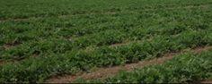 Más de 3.400 agricultores y ganaderos empezarán a recibir esta semana el anticipo de las ayudas de la PAC