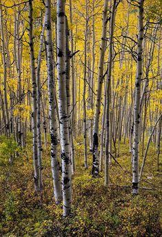 ***Autumn colours (Ohio Pass, Colorado) by Kipp Schoen on 500px af.c.