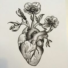 Anatomical heart drawing, anatomical heart tattoos, human heart drawing, heart with flowers tattoo 16 Tattoo, Tattoo Drawings, Body Art Tattoos, Heart Drawings, Tattoo Music, Mehndi Tattoo, Tattoo Quotes, Roots Tattoo, Flower Drawings