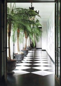 Black and white sunroom with palm trees.