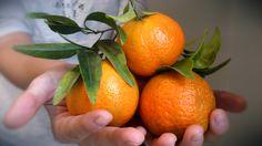 ¡¡¡¡Nos acaban de llegar las primeras mandarinas ecológicas a la oficina y están riquísimas!!! Te las enviamos directas del productor: http://www.biolandia.es/alimentos/1853-mandarinas-basol-ecologicas-5kg10kg-o-15kg.html