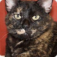 Adopt A Pet :: Cleopatra - Savannah, MO