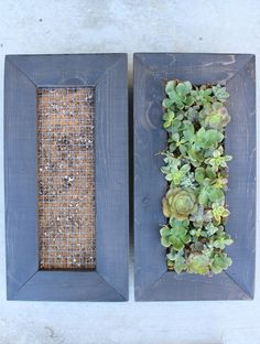 Design your very own Living Wall Hanging Succulent Garden. This is for a handmade wood vertical succulent garden with everything you need for your