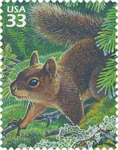 Douglas squirrel.