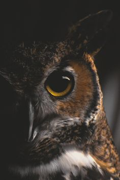 """fuckyeahvikingsandcelts: """" Owls stare into your soul. """""""