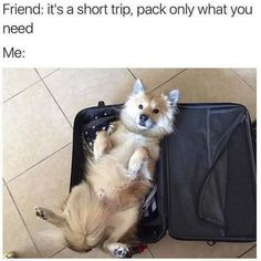 45 Funny Dog Memes - Funny Dog Quotes - Who doesnt need a laugh? Here are 45 funny dog memes that deal with everything from destructive behavior to giving questionable legal advice. The post 45 Funny Dog Memes appeared first on Gag Dad. Funny Dog Memes, Funny Animal Memes, Cute Funny Animals, Funny Dogs, Awkward Animals, Silly Dogs, Funniest Memes, Dumb Jokes, Love My Dog
