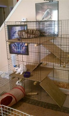 BinkyBunny.com - House Rabbit Information Forum - BinkyBunny.com - BINKYBUNNY FORUMS - HABITATS AND ...