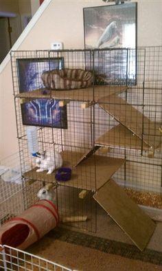 BinkyBunny.com - House Rabbit Information Forum - BinkyBunny.com - BINKYBUNNY FORUMS - HABITATS AND ...