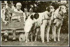 ❤ =^..^= ❤  Postcard, 1926.