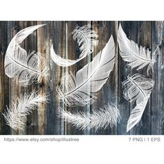 White feather digital clip art set, photo overlay, illustration,... ($5) ❤ liked on Polyvore featuring home, home decor, wall art, photo illustration, white home accessories, photo drawing, photo wall art and feather illustration