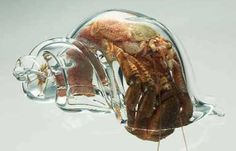 Zapatillas de cristal para cenicientas marinas - TGIF: Well if the glass slipper fits…