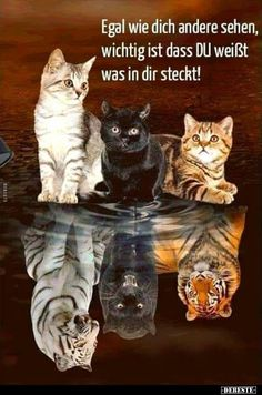 Special Order - Kittens Reflection - Full Drill Diamond Painting - Specially ordered for you. Delivery is approximately 4 - 6 weeks. Baby Animals Super Cute, Cute Baby Cats, Cute Little Animals, Cute Cats And Kittens, Cute Funny Animals, The Animals, Baby Animals Pictures, Cute Animal Pictures, Funny Pictures