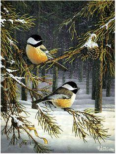 Chickadees-Sam Timm My little Chickadee . Pretty Birds, Love Birds, Beautiful Birds, Animals Beautiful, Birds Pics, Black Capped Chickadee, Tier Fotos, Backyard Birds, Bird Pictures