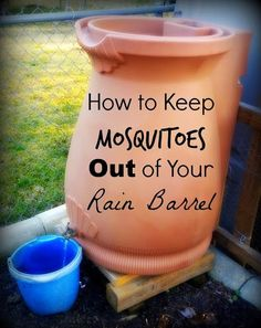 Put goldfish in your rain barrel! Greneaux Gardens: How to Keep Mosquitoes from Breeding in Your Rain Barrel Spring brings mosquitoes to the rain barrels, but this easy trick will keep them away NATURALLY!