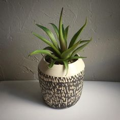 This beautiful planter is great for all air plants, cacti and succulents and is wheel thrown, hand carved is made with B-Clay with black slip