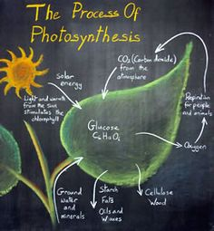 The process of photosynthesis ~ chalkboard drawing (image only)