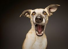 Most crazy dog ever !   http://ift.tt/2n2bdEF via /r/dogpictures http://ift.tt/2n23vKC  #lovabledogsaroundtheworld
