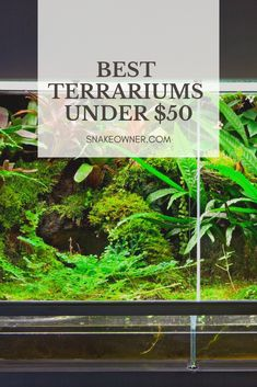 87 Best Snake Terrarium Images In 2019 Reptile Cage Reptile