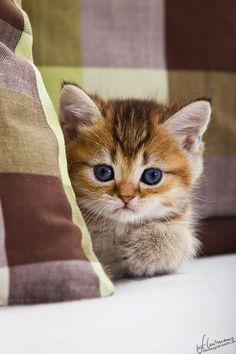 Minik Kedi / Kedi Resimleri - https://guzelresimler.info/